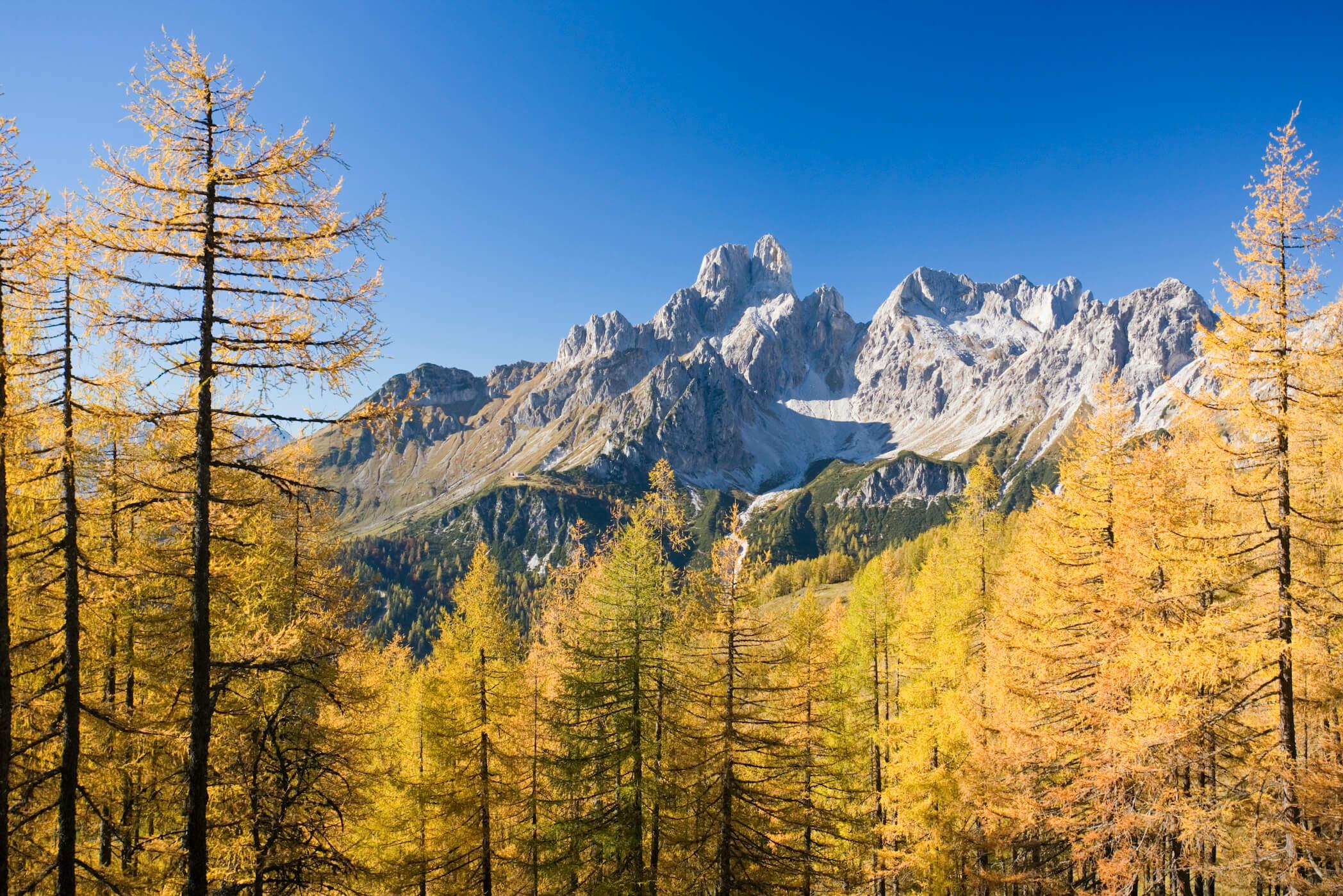 der goldene Herbst in Filzmoos